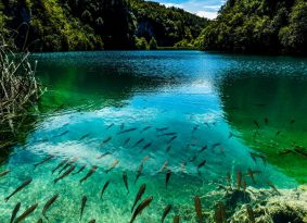 plitvice-lakes-national-park-fish